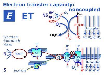 Et Capacity Bioblast