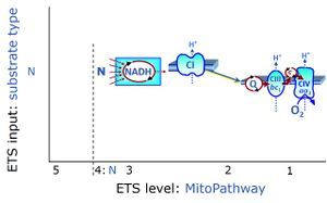 Nadh Electron Transfer Pathway State Bioblast