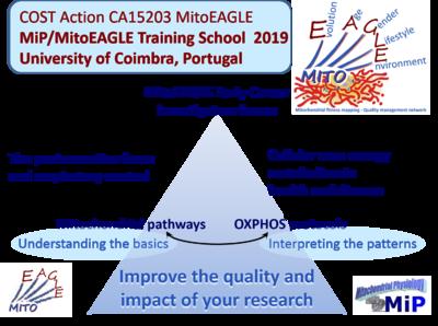 MiPschool Coimbra 2019 - Bioblast